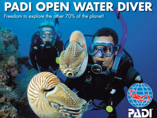 Open Water Diver looking at sea life
