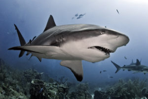 Aware Shark Conservation picture of a Shark