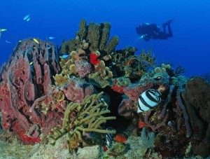 Caribbean reef scuba diving in Mexico