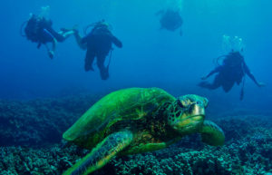 Scuba diving in the Galapagos Islands.